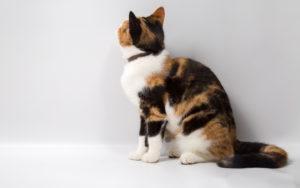 cat-1465318118s8w